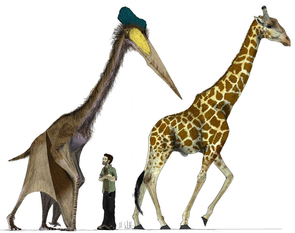 Hatzegopteryx Size Image - Hatzegopteryx-...