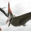 PteranodonPortrait
