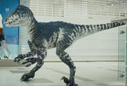 2x1 RaptorMain