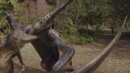 NW1x1 Pteranodon 44