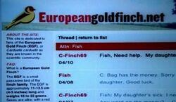 Europiangoldfish