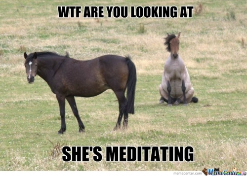 File:Horse-Meditation c 105304.jpg