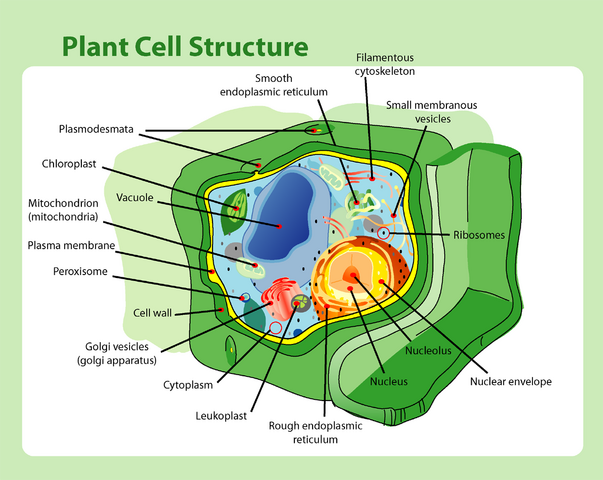 File:Plant cell structure.png