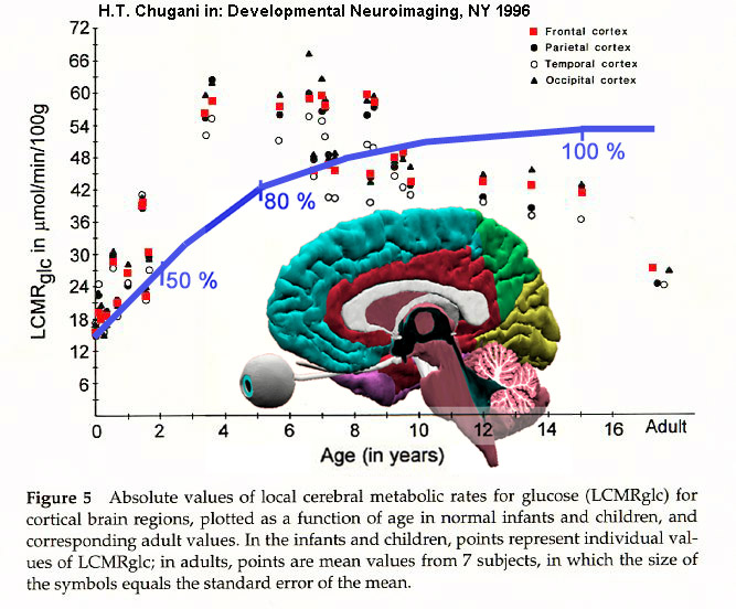 Brain-metabolism