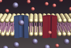 Cell-membrane-electrochemical