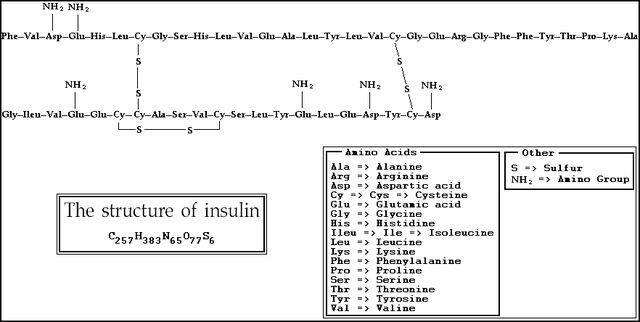 File:Insulin structure.JPG
