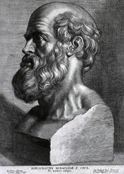 Hippocrates rubens