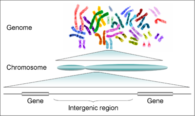 Human genome to genes