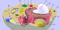 Eukaryote