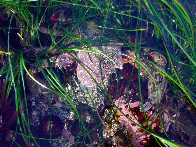 File:Camouflaged crab.JPG