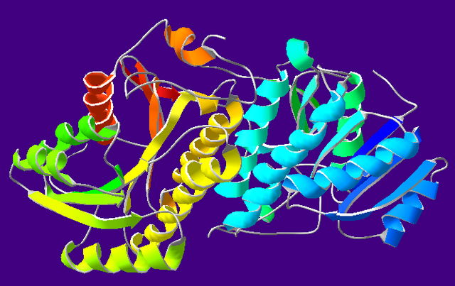 File:AlcoholDehydrogenase-1A4U.png