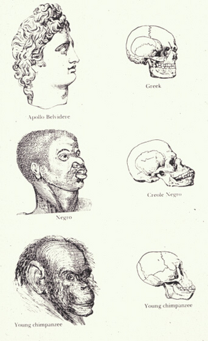 File:Races and skulls.png