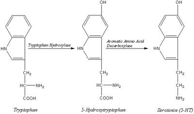 PKU Serotonin