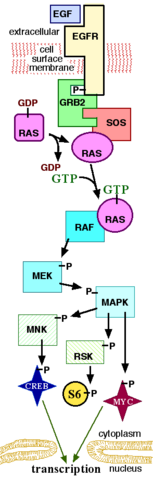 File:MAPKpathway.png