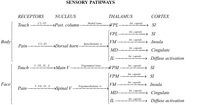Touch Pain Pathways