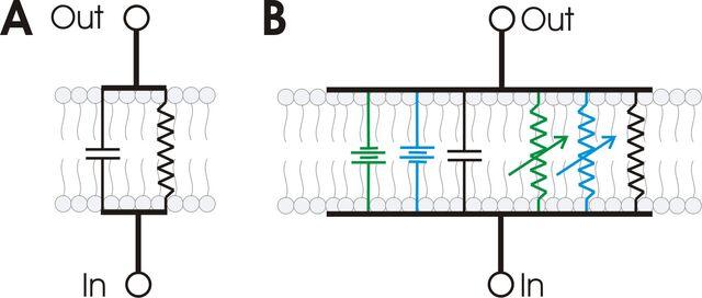 File:RC membrane circuit.jpg