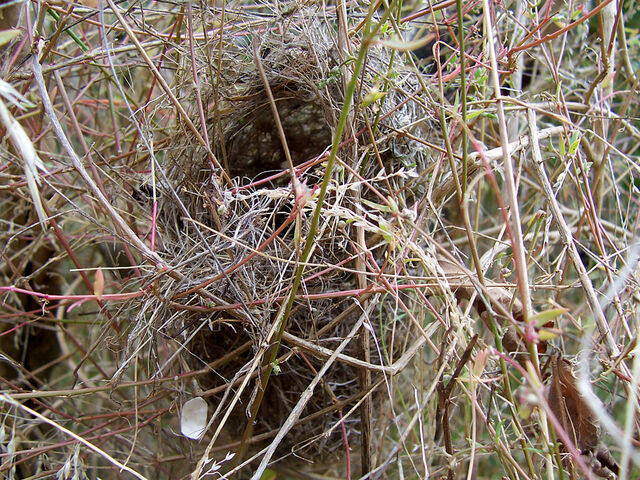 File:Bird nest in grass.jpg