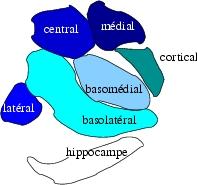 Amigdale1