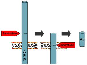 APP processing