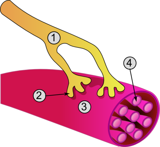 File:Synapse diag3.png
