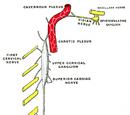 Superior cervical ganglion