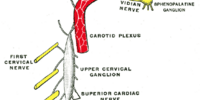 Internal carotid plexus