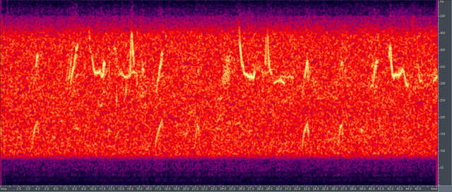 File:Humpback song spectrogram.png