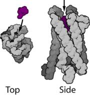 GPCR1