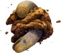 Space slug 2.jpg