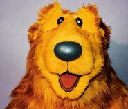 Bear Headshot