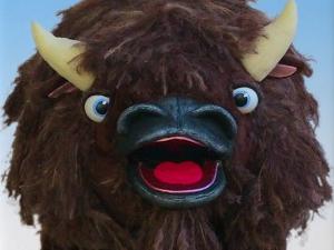 Buffalophoto