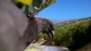 Pigeon 399