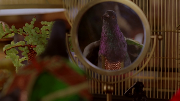 Pigeon 332