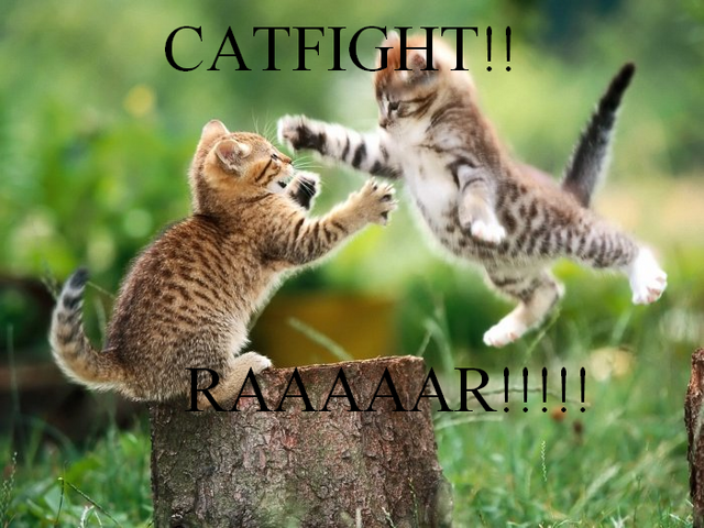 File:Catfight.PNG