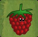 Rashberry
