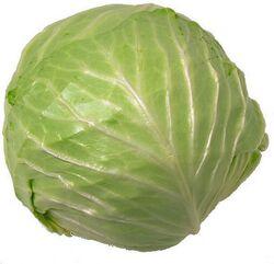 Cabbage5 o