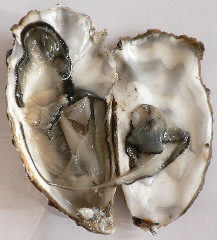 File:Gigas oyster.jpg