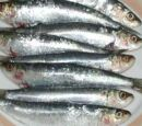 Sardines and pilchards