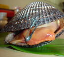 Ark clam