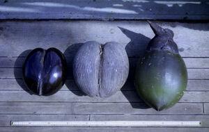 Drupe Fruit