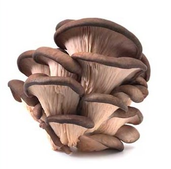 File:Oyster mushrooms.jpg