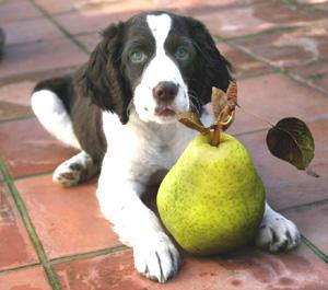 Doggiepear