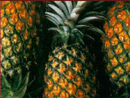 File:Pineapple3.jpg