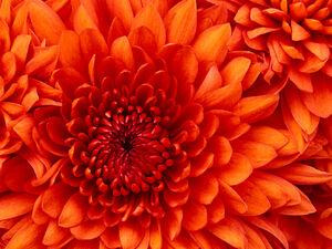 MY PRECIOUS FLOWER