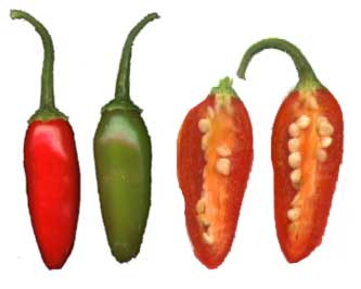 File:Serrano pepper.jpg