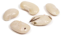 File:WhiteBean.jpg