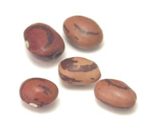 File:Eye of the goat bean.jpg