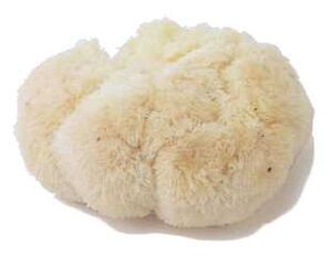 Pompom mushroom