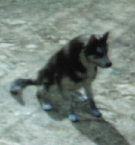 File:Rdr unnamed dog.jpg