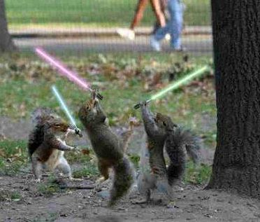 Squirrels lightsabers